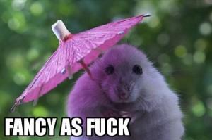 funny-hamster-tiny-umbrella-cute